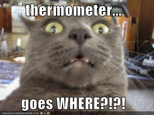 The Poking Thread - Page 8 Funny-pictures-cat-realizes-where-the-thermometer-goes