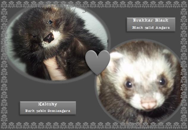 *Kaleshy & Drakkar* KaleshyDrakkar_zps1e758310