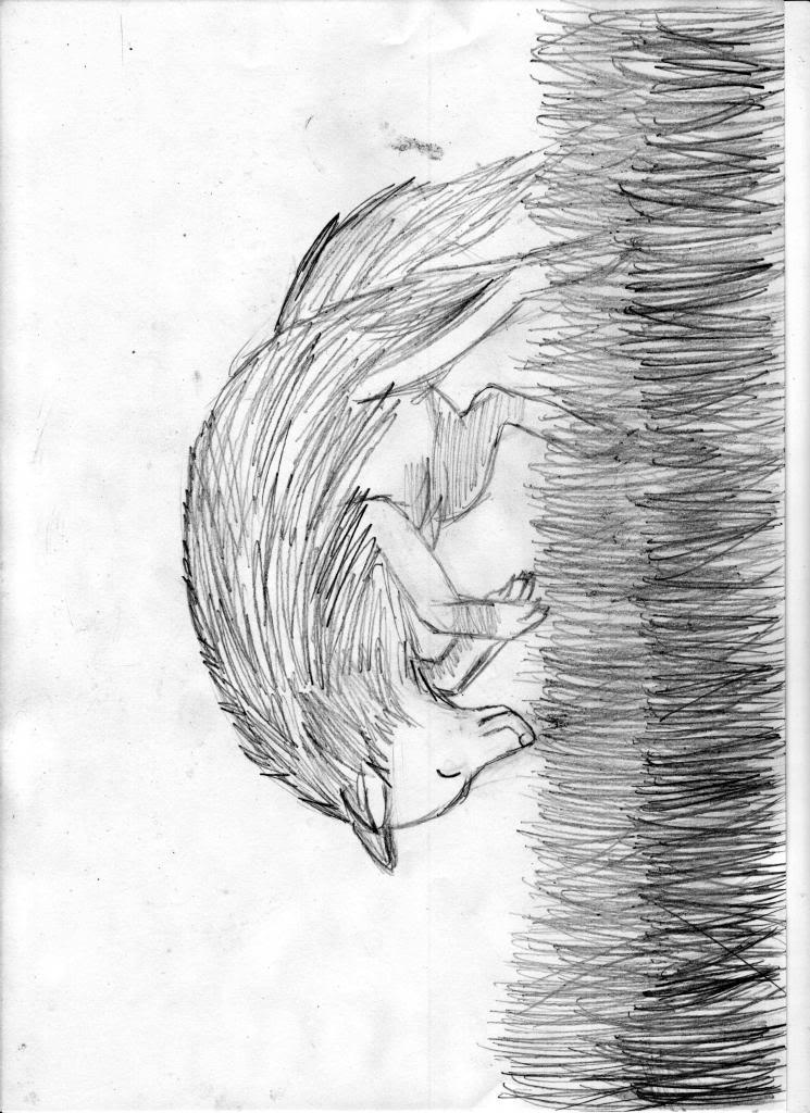 dibujo de un lobo Lobito3-copia