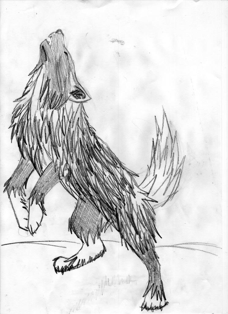 dibujo de un lobo Lobos