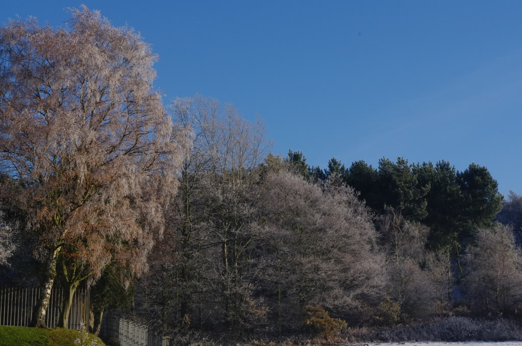 இயற்கை அழகு நிறைந்த காட்சிகள்  - Page 5 Frozen_trees_end_of_path
