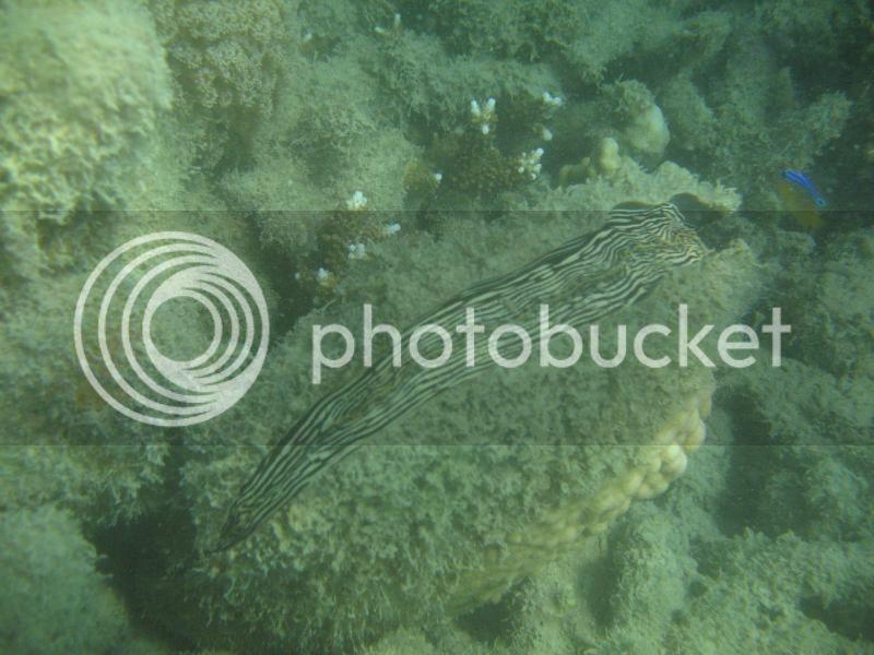 Snorkling Whitsunday IMG_3749