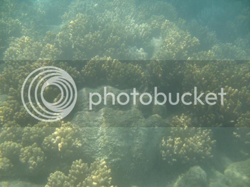 Snorkling Whitsunday IMG_3752