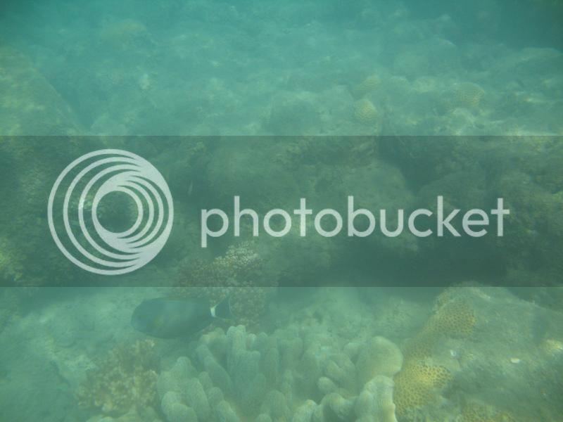 Snorkling Whitsunday IMG_3755