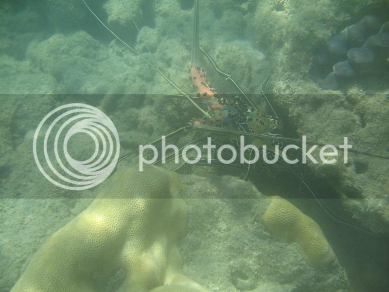 Snorkling Whitsunday IMG_3757