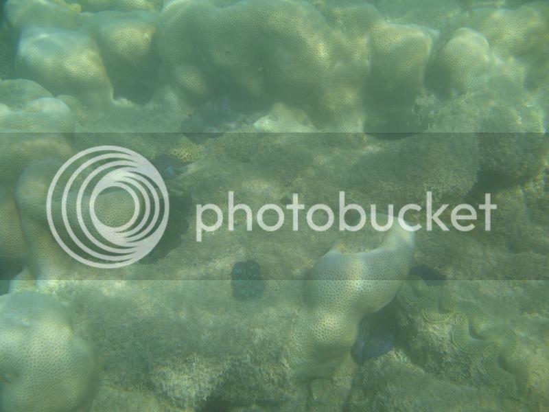 Snorkling Whitsunday IMG_3759