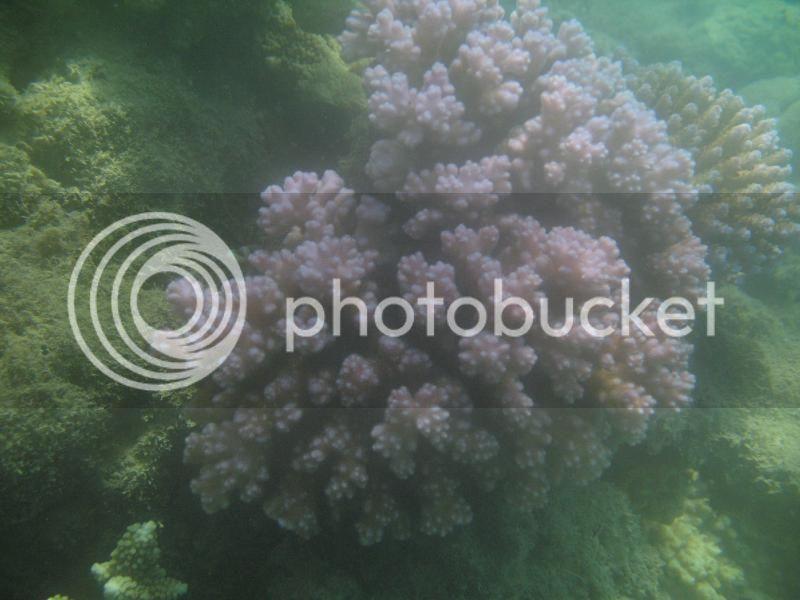 Snorkling Whitsunday IMG_3767
