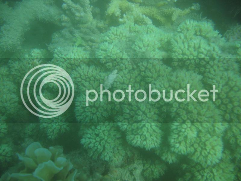 Snorkling Whitsunday IMG_3769