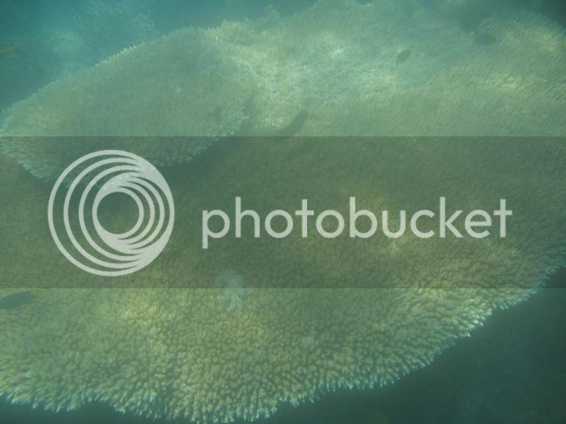 Snorkling Whitsunday IMG_3773