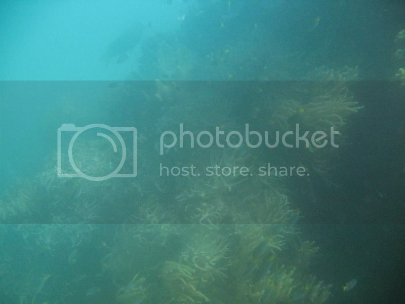 Snorkling Whitsunday IMG_3783