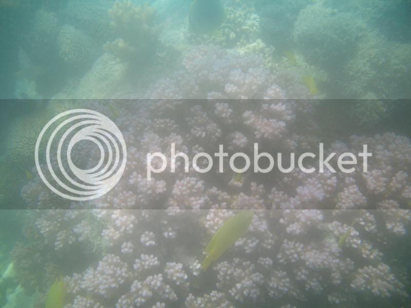 Snorkling Whitsunday IMG_3804