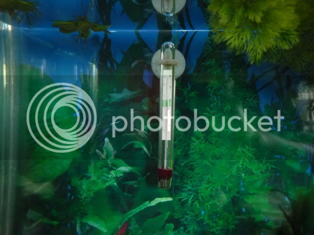 Fotos de Mi Acuario en Proceso de Ciclado P1040832