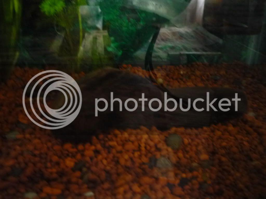 Fotos de Mi Acuario en Proceso de Ciclado P1040834