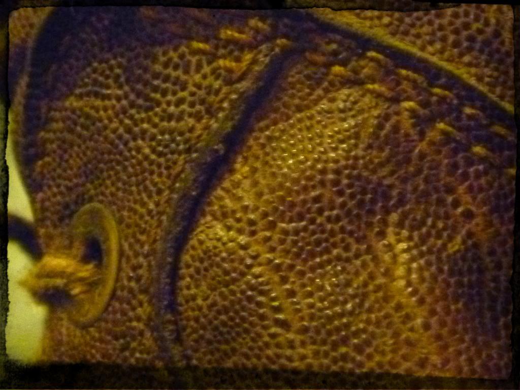 Courteney Boots P1090489_zps4080fc4e-1_zpsb35b3e7f