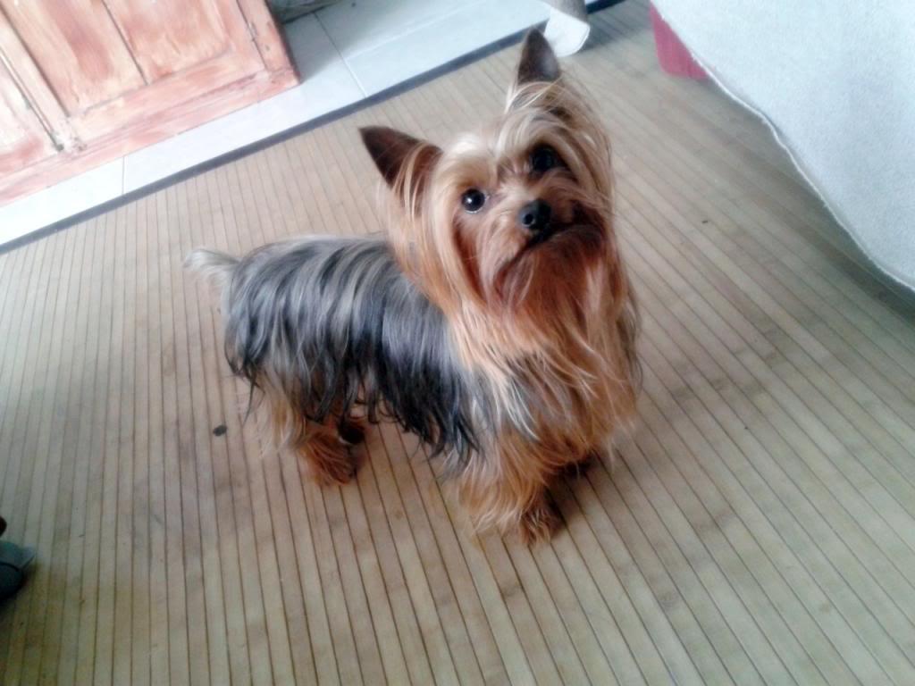 Os presento a mi perro :) 2013-05-09194453_zps9ef003ee