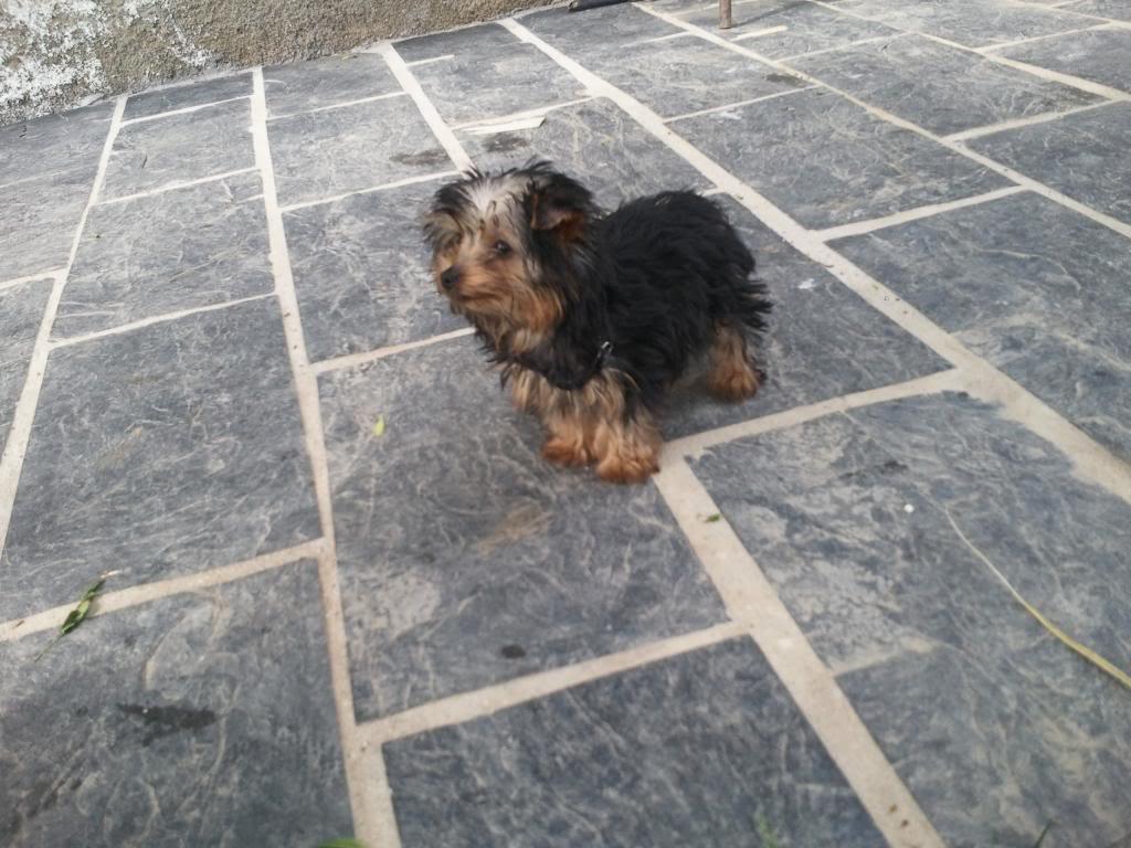 Os presento a mi perro :) Foto0801_zps43adfb54