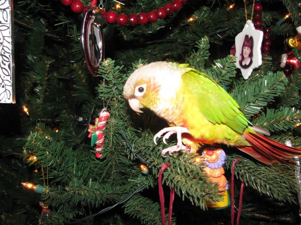 Peatree's Christmas Pictures 12-25-12Peatree12