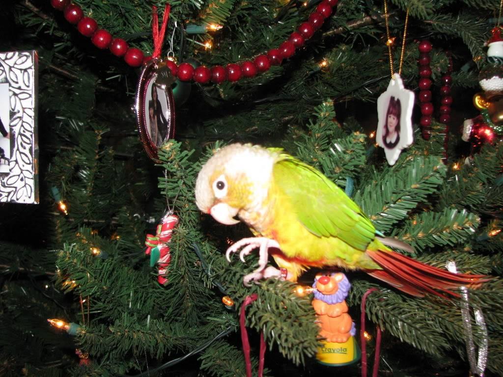 Peatree's Christmas Pictures 12-25-12Peatree17