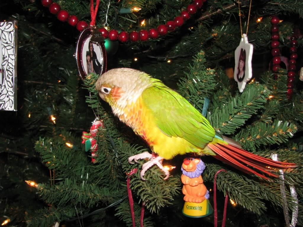 Peatree's Christmas Pictures 12-25-12Peatree20