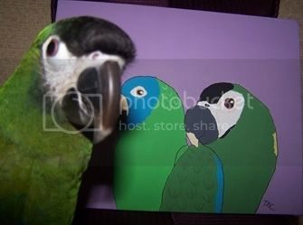Conue and Macaw Painting Chyna