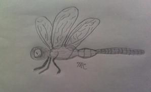 Dragonfly and Mouse Dragonfly