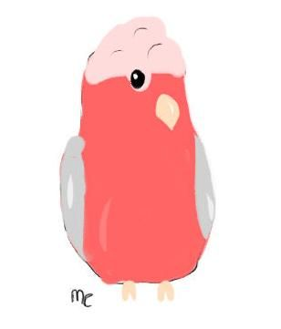Rose Brested Cockatoo Paint4