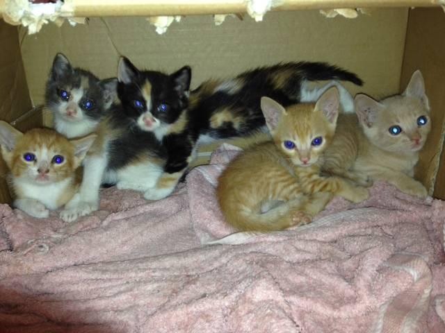 8 γατακια ψάχνουν σπίτι Αθήνα __________1_zps57f3052a