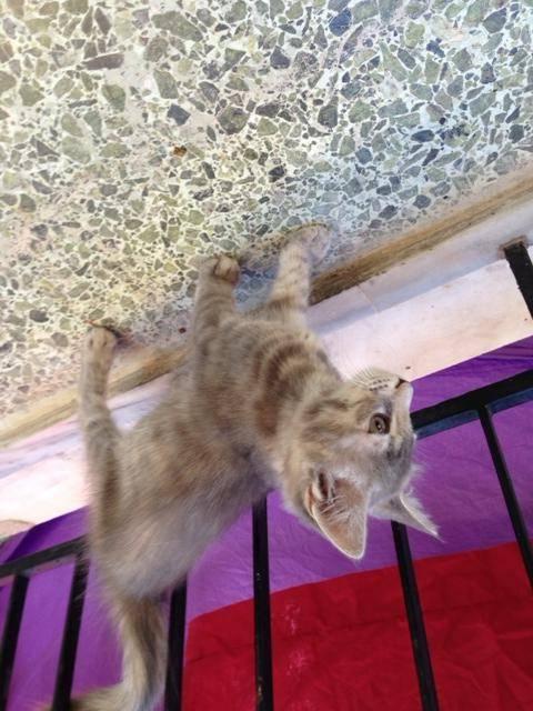 8 γατακια ψάχνουν σπίτι Αθήνα __________3_zpsd888c2b2