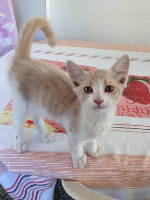 8 γατακια ψάχνουν σπίτι Αθήνα __________4_zps28861631