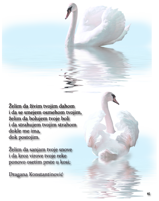 Upotrbljena romantika - Page 5 Labud1_zpsf08ae910