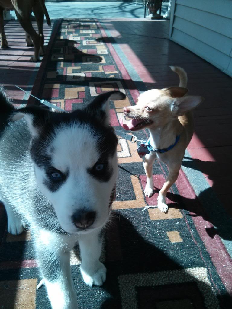 Say Hello To Laika! Update- May 4 new pics IMG_20130502_150917_zps16052478
