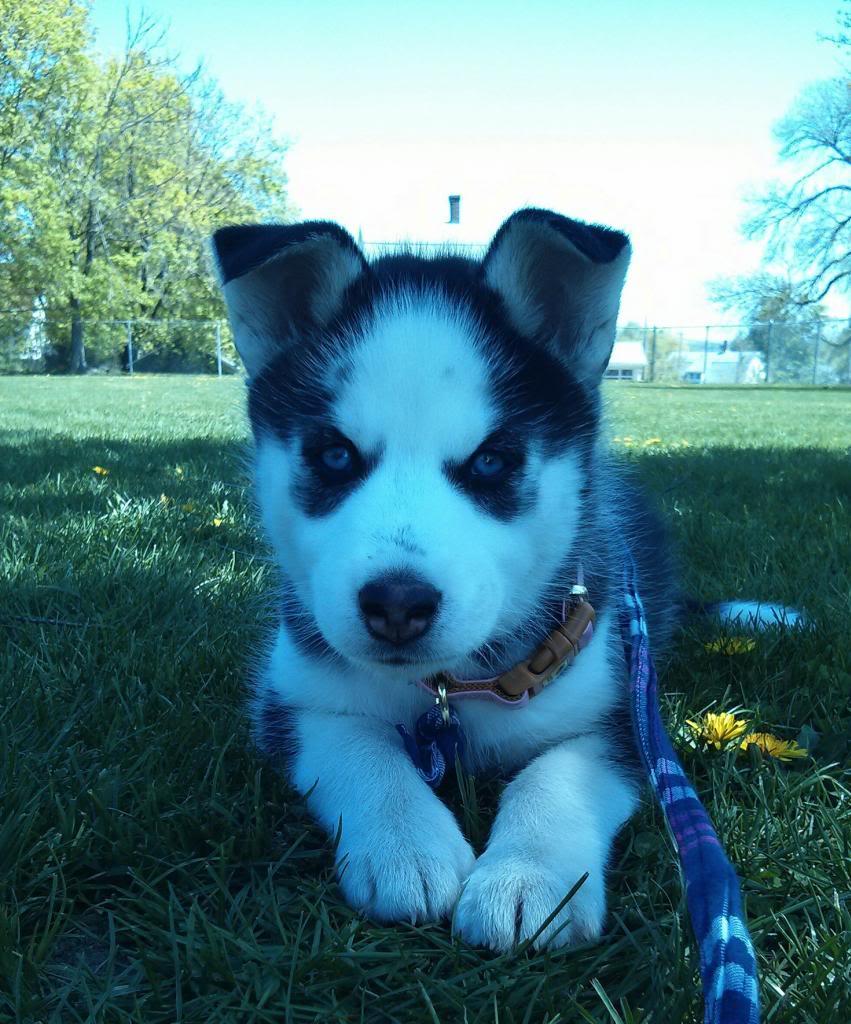 Say Hello To Laika! Update- May 4 new pics IMG_20130503_152556_zps5917ae7f