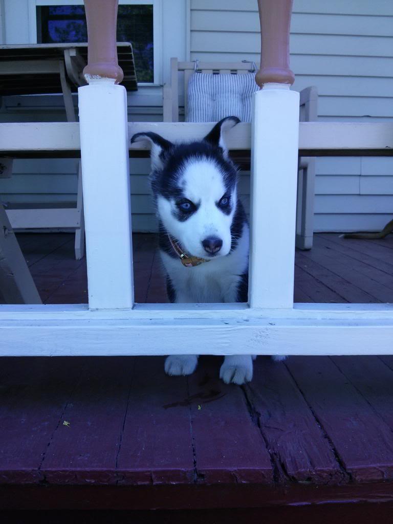 Say Hello To Laika! Update- May 4 new pics IMG_20130504_131802_zps8265b286