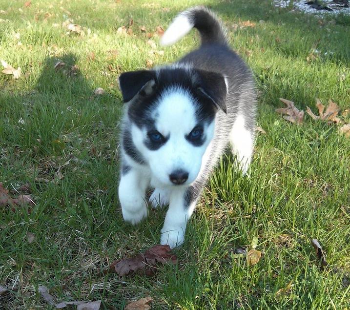 Say Hello To Laika! Update- May 4 new pics Ll_zpsa788d13f