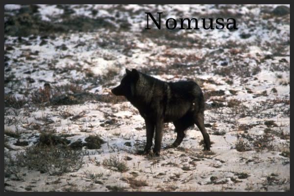 Nomusa - Step Into Her Path 81ddc1f8-5e07-490c-bc65-6440062321f2_zps90e2e7a4