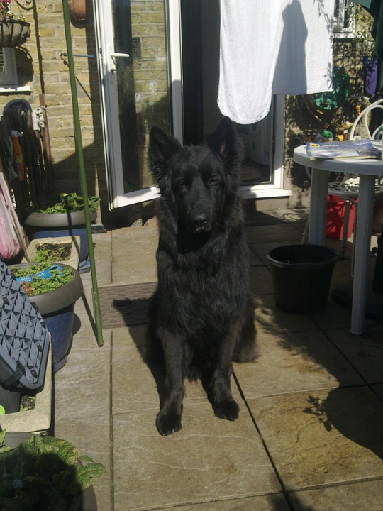 Prince VERY distressing pictures now homed 006_zpsc06ac260