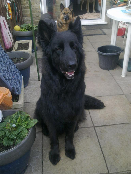 Prince VERY distressing pictures now homed 016_zps9350484f