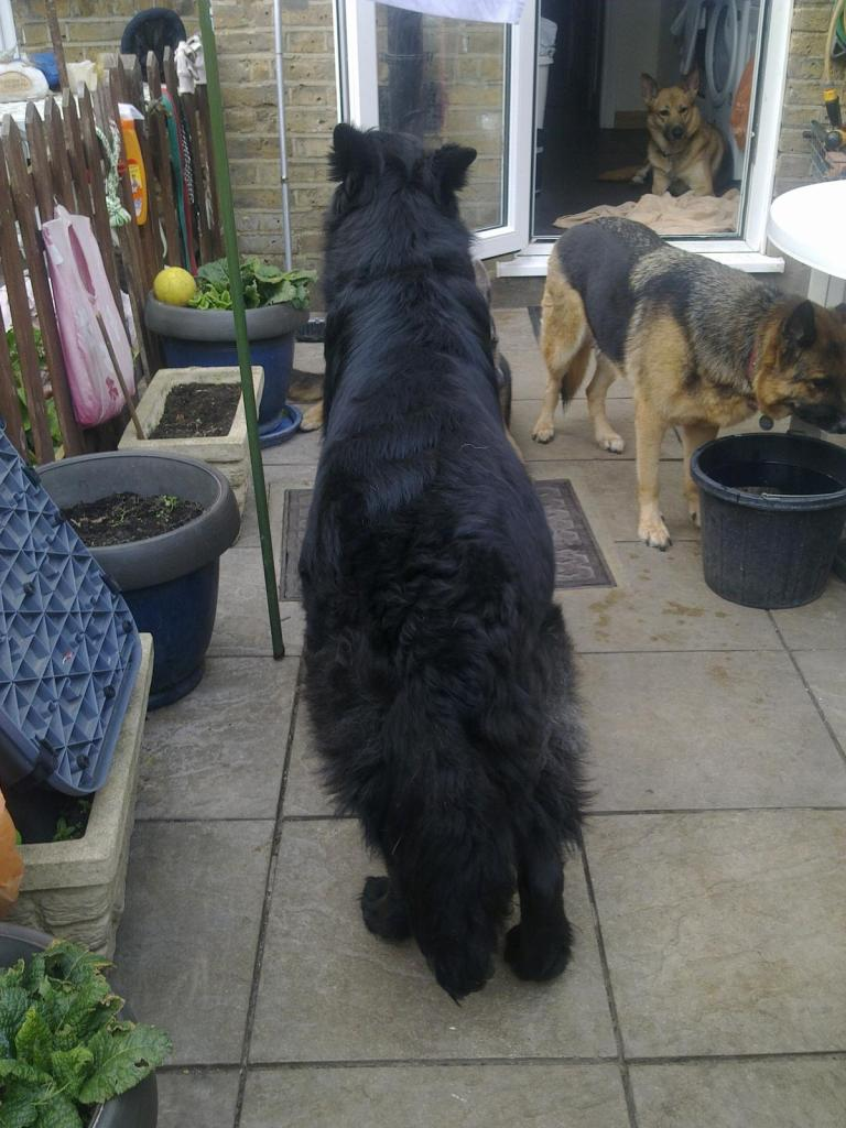 Prince VERY distressing pictures now homed 018_zpsb77024d3