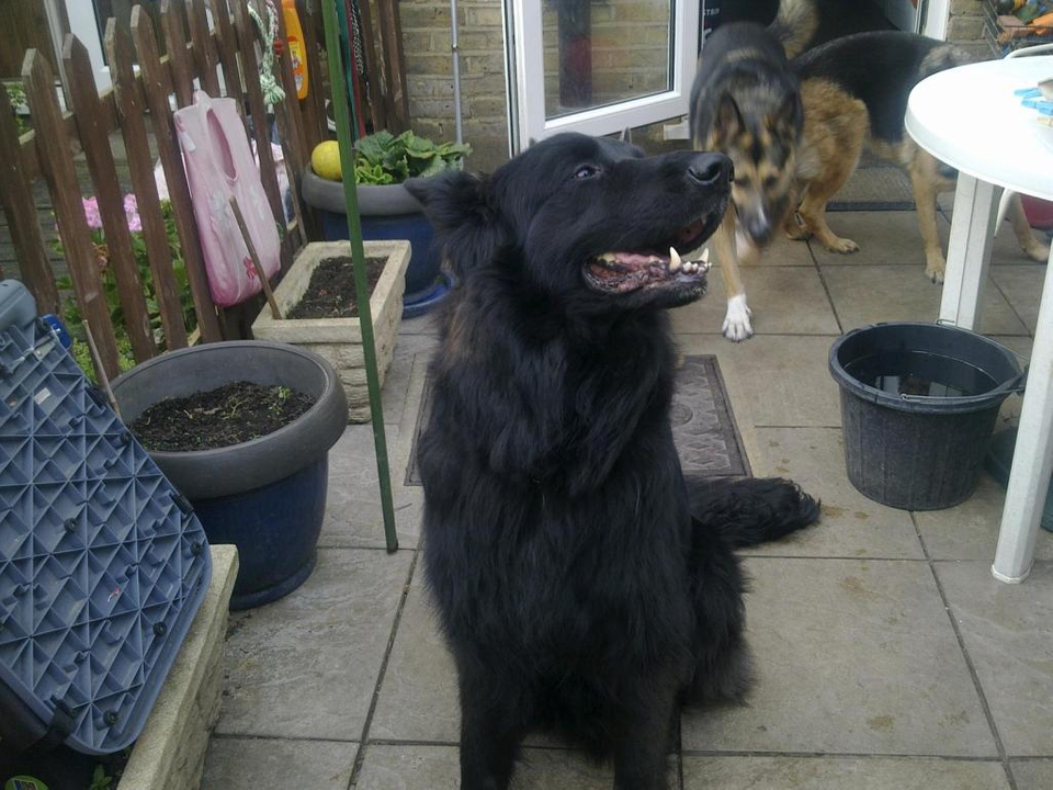 Prince VERY distressing pictures now homed 019_zps5b308f14