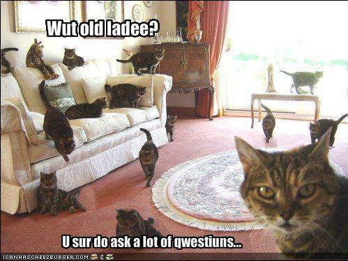 Lolcats thread! - Page 6 Funny-pictures-cat-accuses-you-of-asking-too-many-questions