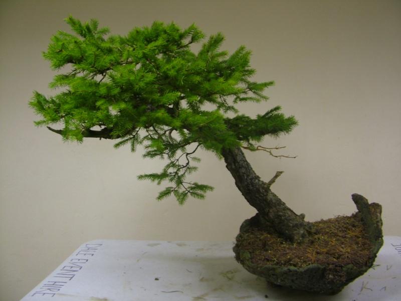 Rob Atkinson's Spruce (Picea Abies) in an Erik Križovenský pot Dscf7526_zpsd99ebb57