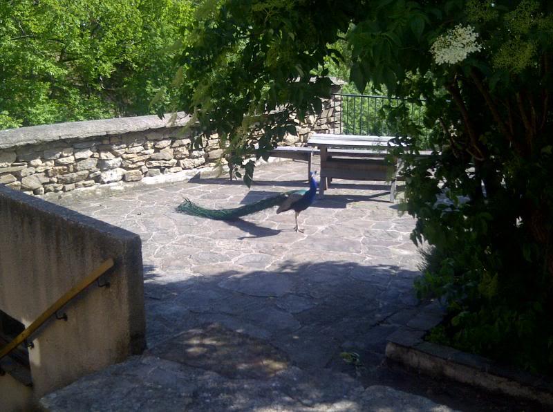 Petit hameau de Bardou dans le 34 IMG-20130602-00326