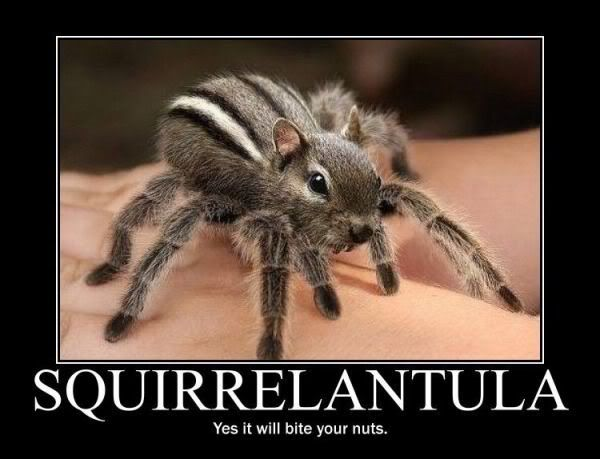 Motivational Pictures of the day - Page 7 Squirrelantula