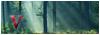 Foro de las Valquirias [Élite] 100x35