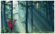 Foro de las Valquirias [Confirmación] 80x50