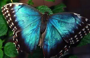 Welcome to the forum Bluebutterfly