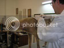 Le chien sur la page d'accueil CHINO2EMESEMAINE7