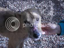 Le chien sur la page d'accueil CHINOFINDECEMBRE0810