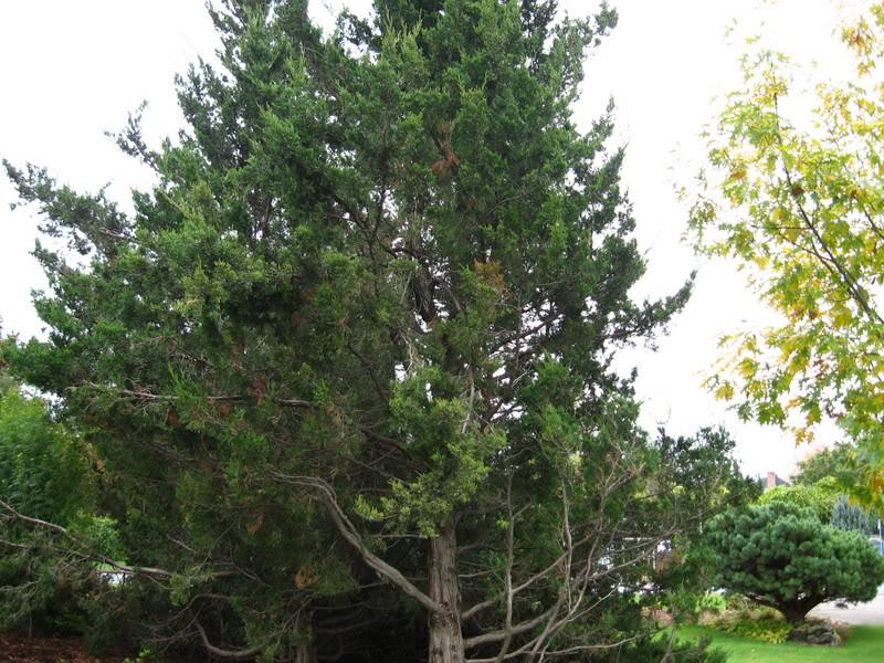 Pouver vous identifier ces arbres (jeux) IMG_24871