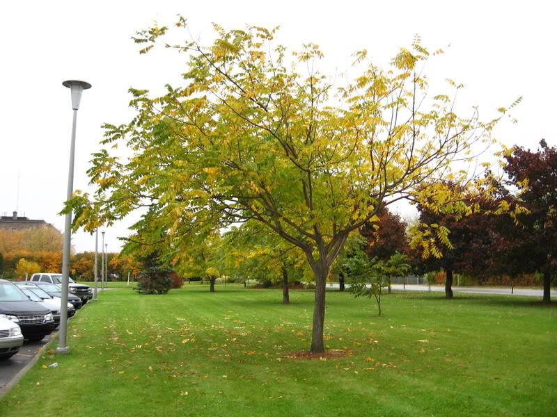 Pouver vous identifier ces arbres (jeux) IMG_24881